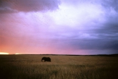 Elephant sunset, Masai Mara