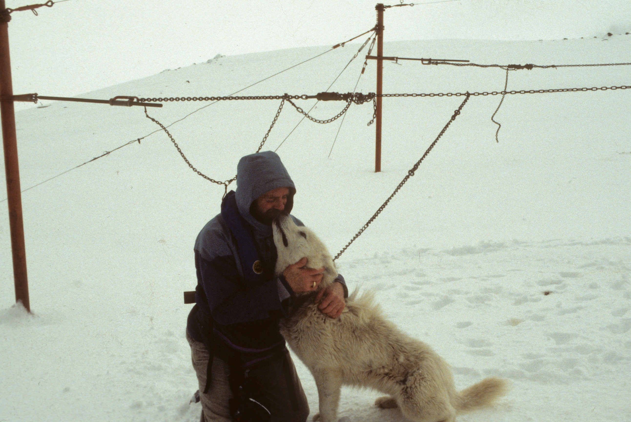 THE LAST SLED DOG IN THE ANT ARCTIC