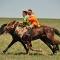 Gobi horse race