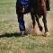 Gobi horseman