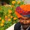 Marigolds, Agra, India