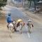 mule-driver-delhi