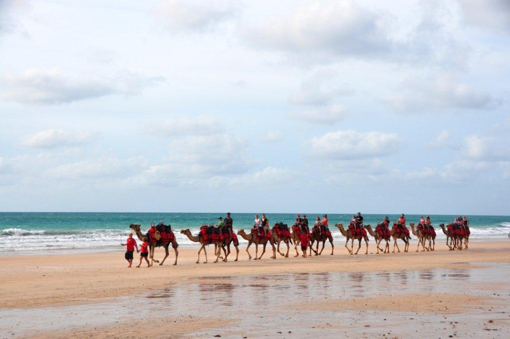 camels-on-the-beach. Broome