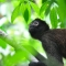 look-out, Bosque Del Cabo, Costa Rica