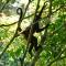 monkey business, Bosque Del Cabo, Costa Rica