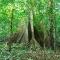 rio-negro-big-tree, Amazon River Basin
